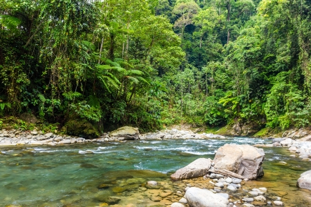 A clear fast flowing river in the tropical rain forest photo