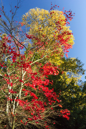 Multi coloured trees and leaves in autumn