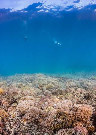 Snorkellers over a tropical coral reef photo