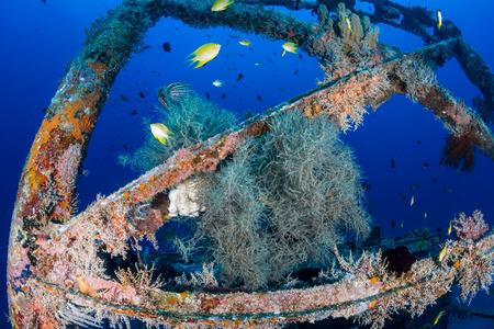 Tropical fish swim around a coral-encrusted shipwreck