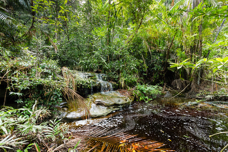 A river in thick tropical rainforest photo