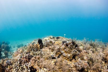 The sun illuninating a tropical coral reef