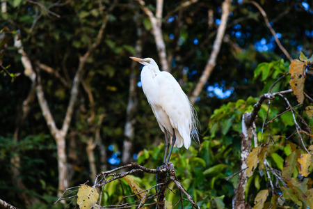 sanctuary: Egret in a tree in the jungle Stock Photo