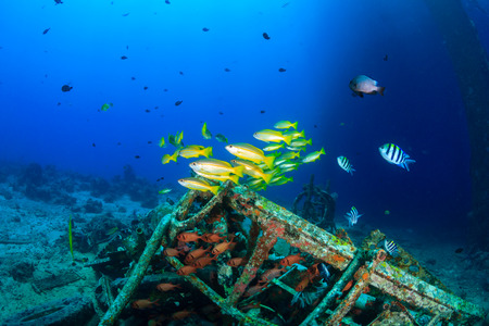Colorful tropical fish and SCUBA divers swim around the manmade debris of an abandoned oil rig photo
