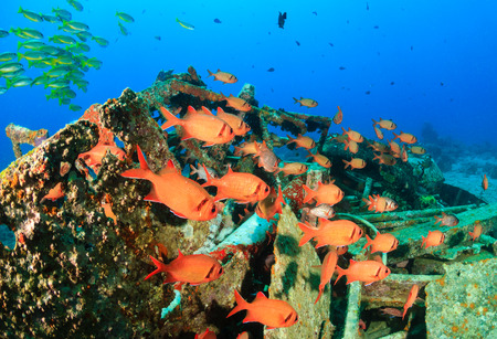 soft coral: Soldierfish shoal around metal wreckage Stock Photo