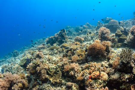 Tropical fish swimming around a healthy coral reef Stock Photo - 29527311