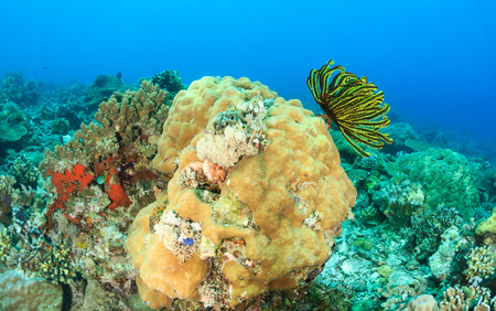 Colorful Crinoids and hard coral on a tropical reef photo