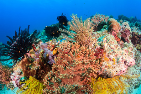 Colourful Crinoids and hard corals on a tropical reef photo