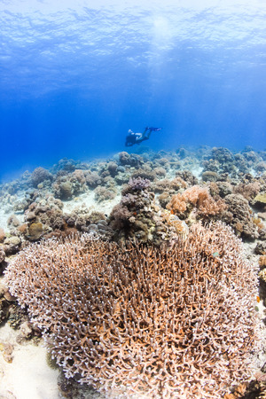 SCUBA diver swimming over a shallow water tropical coral reef photo