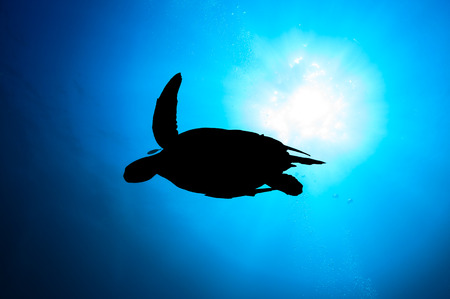 Silhouette of a Sea Turtle with sunburst behind and SCUBA divers bubbles photo