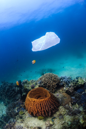 Discarded plastic bag drifts over a tropical coral reef causing a hazard to marine life such as turtles photo