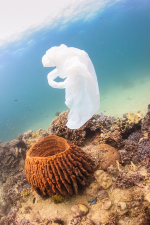 causing: Discarded plastic bag drifts over a tropical coral reef causing a hazard to marine life such as turtles