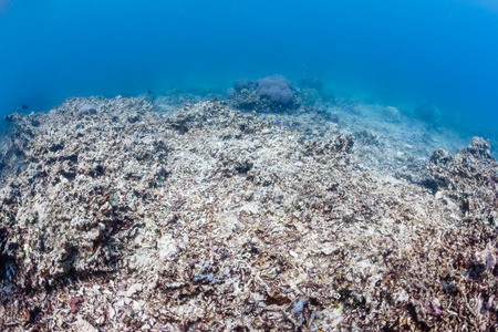 devastating: Environmental Damage - Global warming, ocean acidification and human impact are having a devastating effect on the planets coral reef systems Stock Photo
