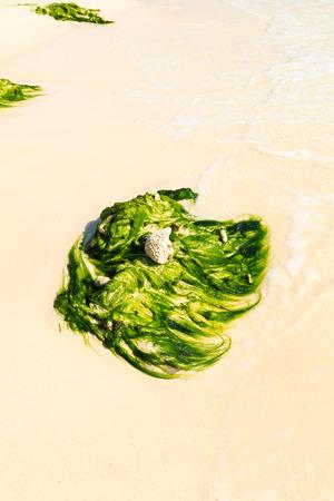 Green, algae covered rock on a tropical beach
