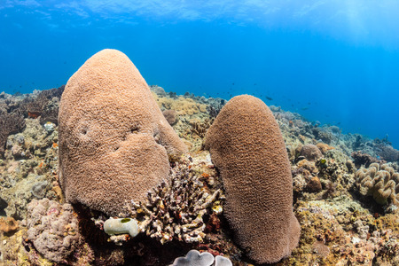 Fingers of coral on a shallow, tropical coral reef with sunrays