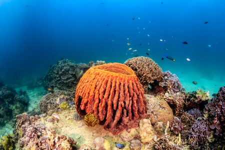 Tropical fish and a barrel sponge on a shallow, tropical reef Stock Photo