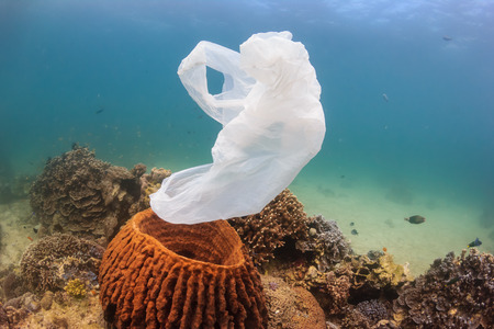 A torn plastic bag drifts over a tropical coral reef causing a hazard to marine life such as turtles Standard-Bild