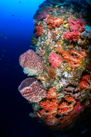 Beautiful soft corals and sponges on a deep,colorful underwater wall Stock Photo - 29821096