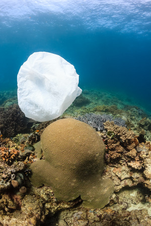 A dumped plastic bag drifts over corals on a tropical reef photo