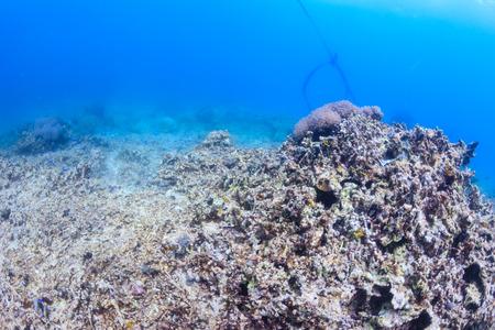 죽은 산호초 - 지구 온난화, 가시 왕관 불가사리, 다이너마이트 낚시 및 기타 관습은 세계를 파괴하고 있습니다.