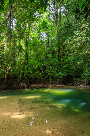 A small freshwater pool in a tropical rainforest Stock Photo