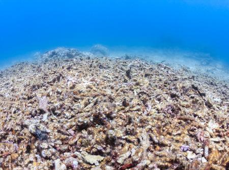 죽은 표백 한 산호초