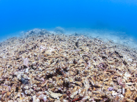 dead fish: A dead, bleached coral reef Stock Photo