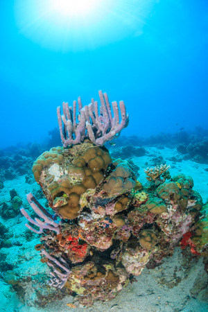 exotic fish: Sunburst behind a healthy hard coral and sponge covered pinnacle