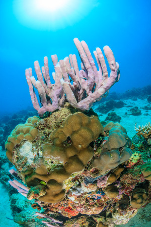 Sponge and coral encrusted pinnacle on a tropical reef Stock Photo