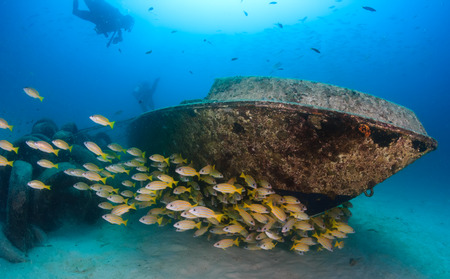 A shoal of snapper and scuba divers around a small underwater wreck