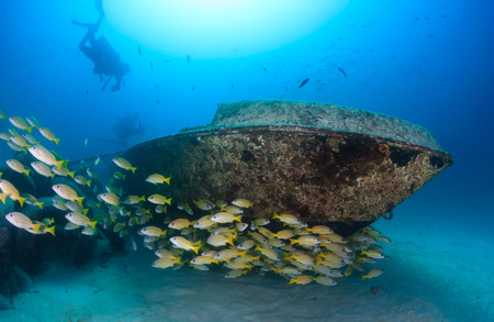 Scuba divers and a shoal of snapper swim around a small underwater yacht wreck Stock Photo