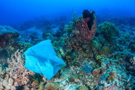 버려진 비닐 봉지는 산호초에 품