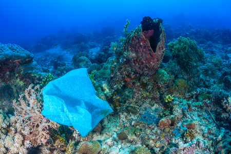 onto: A discarded plastic bag drifts onto a coral reef