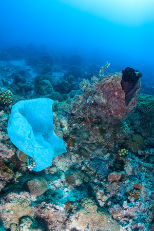 A dumped plastic bag tangles on a coral reef in the ocean