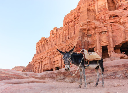 civilisation: A Donkey stands in front of the ancient ruins of Petra, Jordan at dawn