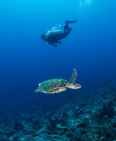 스쿠버 다이 버와 바다 거북이 열 대 산호초에서 수영
