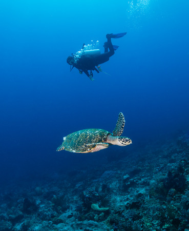 SCUBA diver and a sea turtle swim alongside on a tropical coral reef
