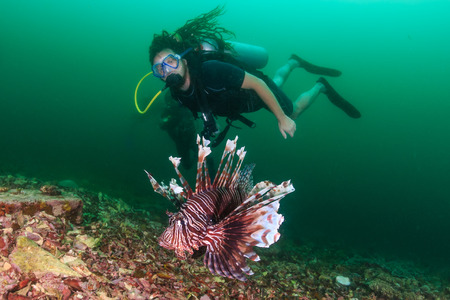 invasive species: SCUBA diver watches a colorful Lionfish on a tropical coral reef
