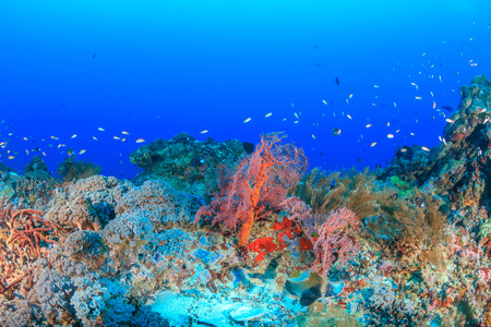 Tropical fish on a deep, healthy coral reef photo