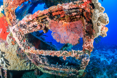 ship wreck: Coral encrusted stairs on an underwater wreck
