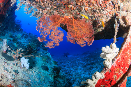 platax: Coral encrusted stairs on an underwater wreck