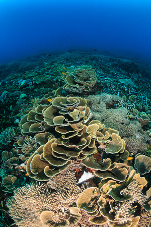 hard coral: Hard corals on a healthy tropical coral reef
