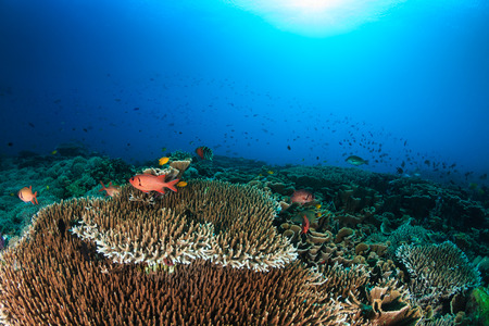 Tropical fish and hard corals on a beautiful coral reef
