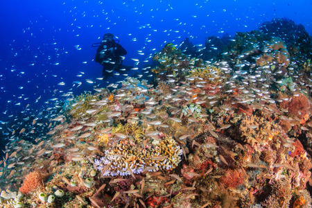 SCUBA diver on a coral reef surrounded by colorful tropical fish photo
