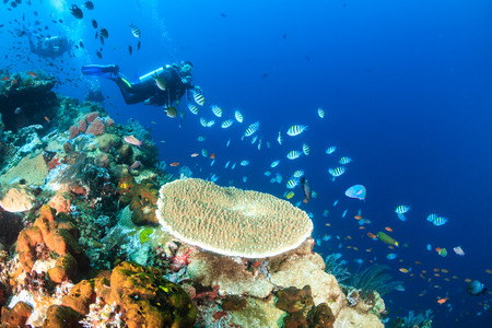 basslet: SCUBA divers swimming over a colorful tropical coral reef Stock Photo