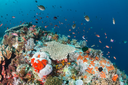 Tropical fish swim along a coral reef wall in clear water