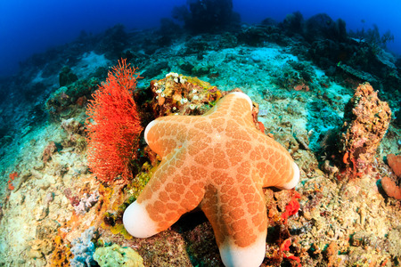 A large starfish sits on the seabed deep underwater Stock Photo