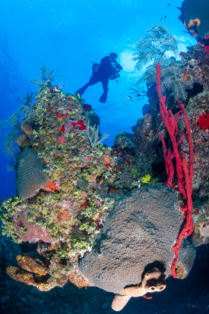 deep water: Technical SCUBA divers swim over a colorful coral wall on a tropical reef