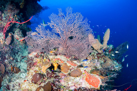 soft corals: Hard and soft corals on a healthy tropical coral reef