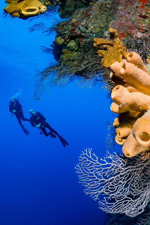 Pair of SCUBA divers on a tropical coral reef